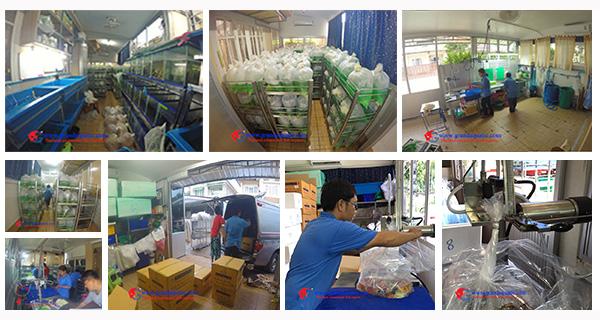Aquarium fish exporter and supplies ornamental fish farm for Online fish stores