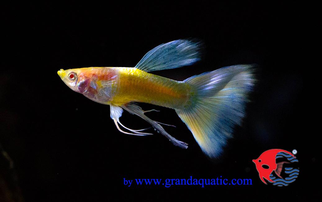 Arowana fish price in bangalore dating 9