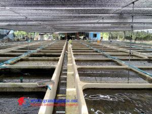 malawi cichlid farm export thailand