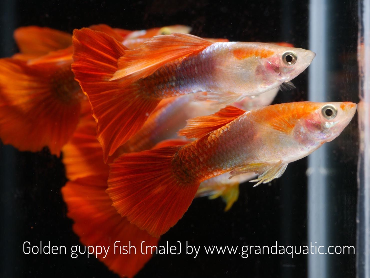 Aquarium Fish List | Ornamental fish export : Al-Aquarium.com