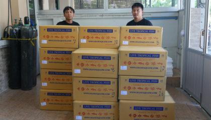 Shipment send freshwater aquarium fish to Oman customer