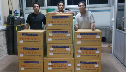 shipment send ornamental fish export to Maldives
