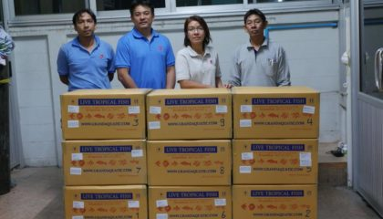 Shipment send freshwater ornamental aquarium fish export to Cyprus customer.
