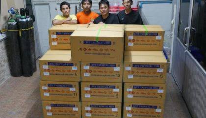 Shipment send ornamental fish export to Bahrain customer
