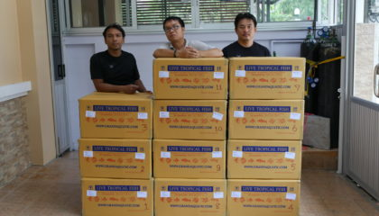 Shipment send freshwater aquarium fish export to Bahrain