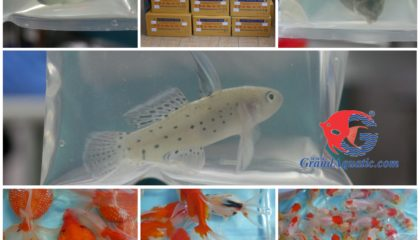 Aquarium fish exporter and supplies , ornamental fish farm